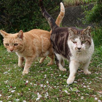 マーブル戦隊さくら猫レンジャー