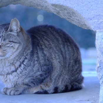眠り猫  冬