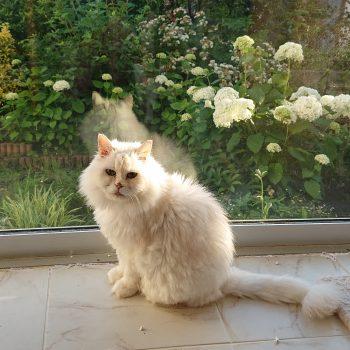 次は私かしら・・・美猫アナベル