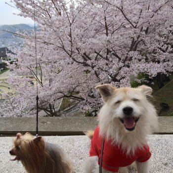 お花見で笑顔