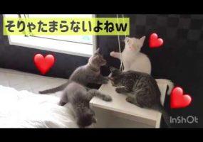 子猫の人気スポット