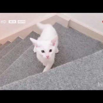 子猫のフィットネスジム