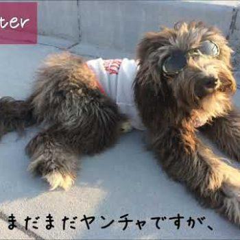 保護犬ジオの成長日記