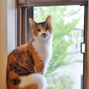 窓辺で絵になる美形さん