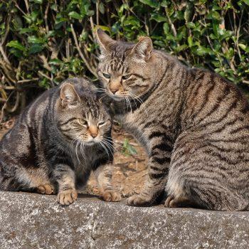 仲良し親子猫