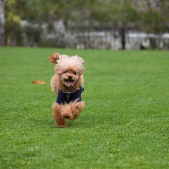 走るのってこんなに楽しい!
