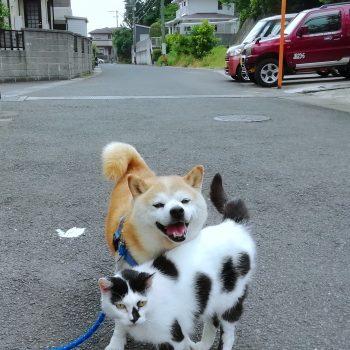 仲良し散歩